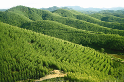 Huizhou Nanyou Forest Development Co.,Ltd. (KPFL)