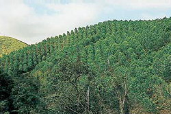 Quy Nhon Plantation Forest Company of Vietnam Ltd. (QPFL)