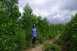 Truong Thanh Oji Plantation Forest Company Limited