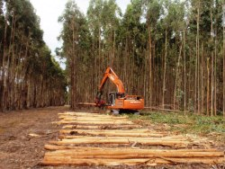 Green Triangle Plantation Forest Company of Australia Pty. Ltd. (GPFL)