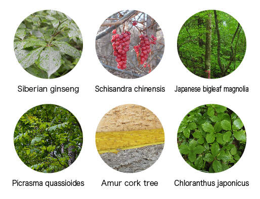 Medicinal plants for common diseases.